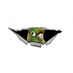 Green 3D parrot - car sticker 15 * 6cm